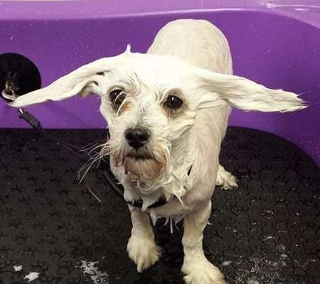 Paw Pad Dog Bathing Shampoo
