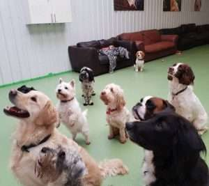 9 dogs all sitting down looking at their trainer