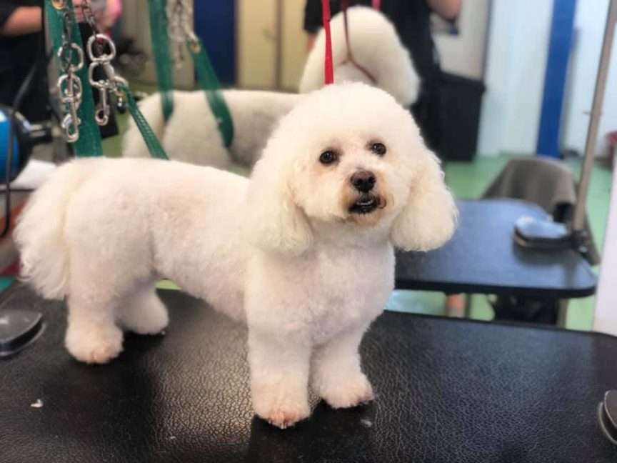 A well groomed dog