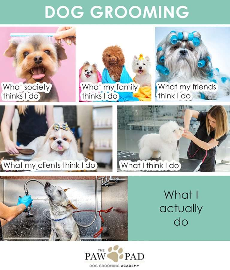 Dog grooming meme showing what I think I do and what my friends think I do