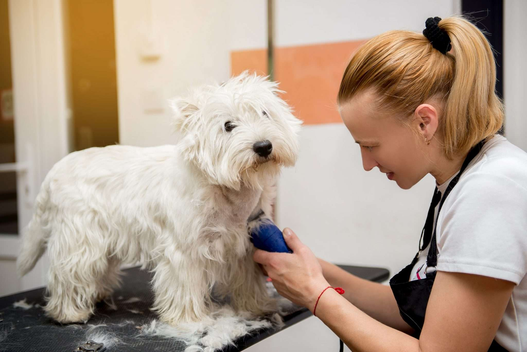 Level 2 Dog Grooming Course