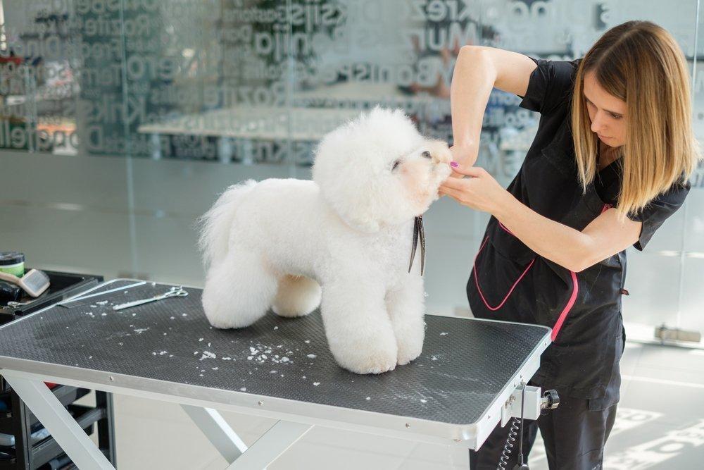 Level 3 Dog Training Course