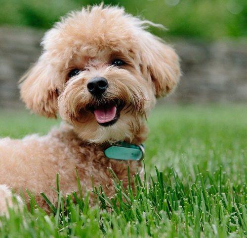 10puppy-dog-pet-3979350-742x853